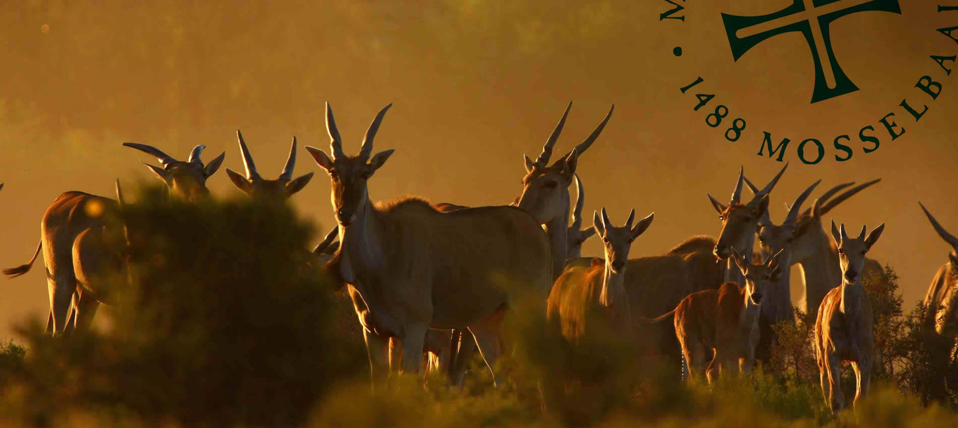 Gondwana-Game-Reserve