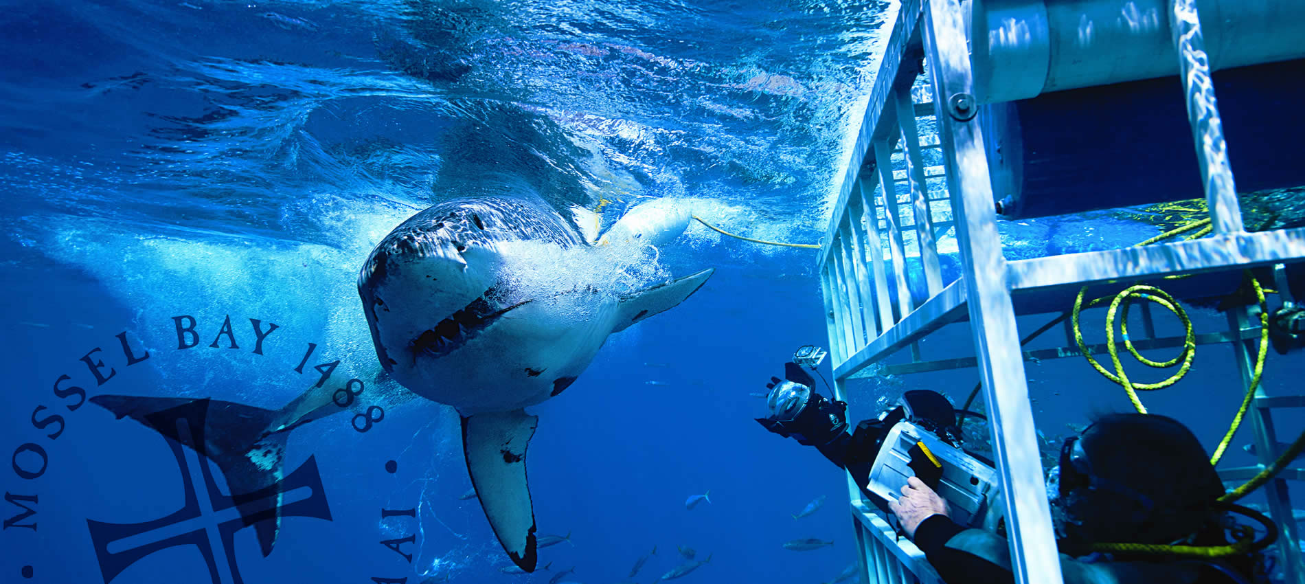Shark-Cage-Diving