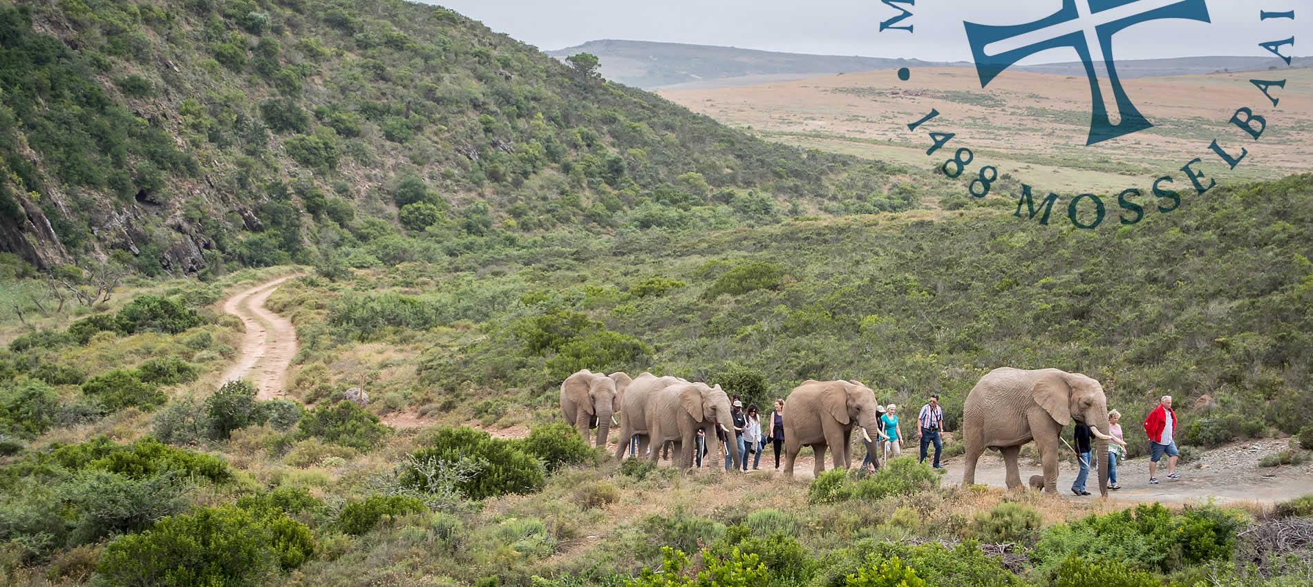 Indalu-Elephant-Experience