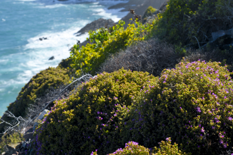 Mossel-Bay-St-Blaise-Hiking-Trail-