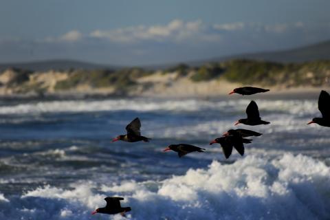 Mossel-Bay-Birdlife-